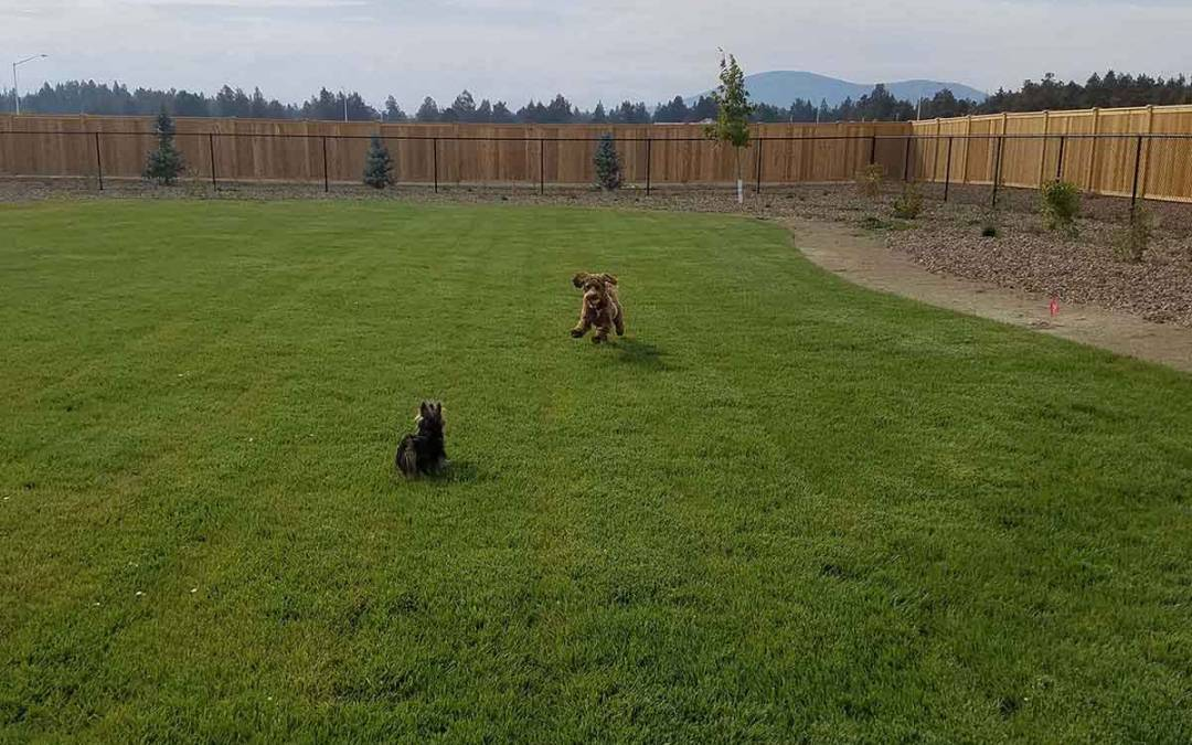 Your Pups Will Feel at Home at the Prairie Crossing Dog Park